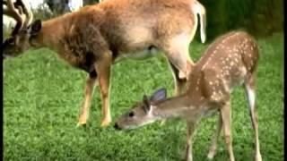 Les animaux de  La Forêt    Chanson éducative pour enfants   Learn french