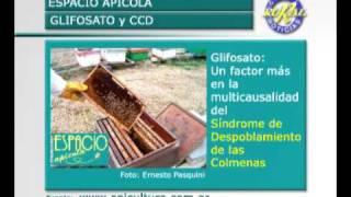 Apicultura Argentina: Toxicidad del Glifosato