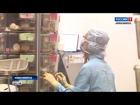 Лекарство от сосудистых катастроф создают новосибирские ученые