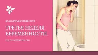3 Неделя Беременности | Беременность по Неделям