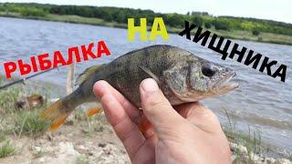 Рыбалка на хищника Ловля окуня и судака на живца