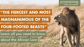 Learn the facts: All you need to know about the African Lion