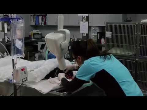 Welcome to Ellerslie Pet Hospital | Edmonton, Alberta