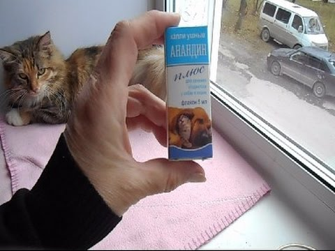 У котенка болят уши