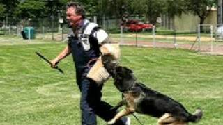 Schutzhund - Long Bite - Man Work - Elite Dog Training Club Of Sandton