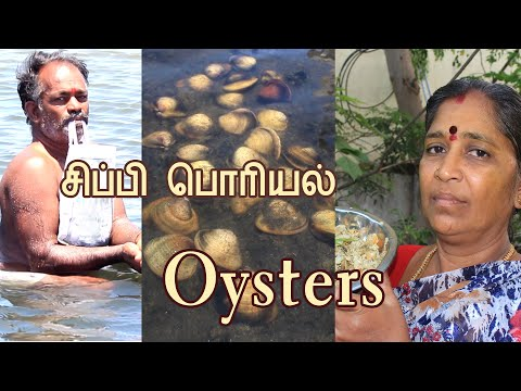 சிப்பி பொரியல் | Oysters Recipe |Oysters shellfish fishing & cooking in  | South Indian Masala Food