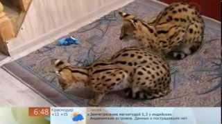 """Мои сервалы на Первом канале в программе """"Доброе утро"""""""