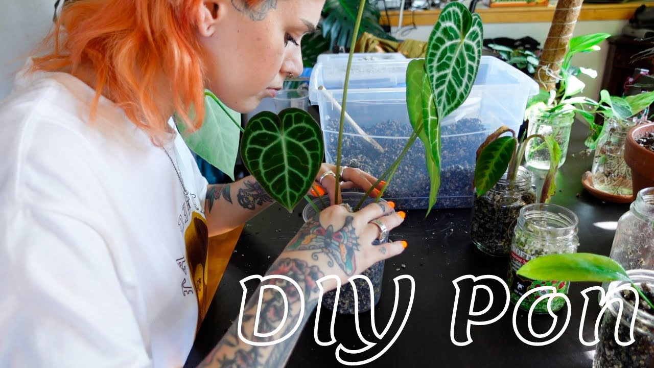 Download DIY Pon + how to make it more affordable hack   how to, my experience, repotting plants (semi hydro)
