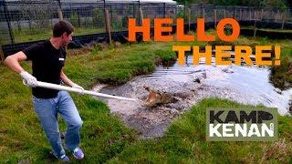 Feeding the Saltwater Crocodiles! thumbnail