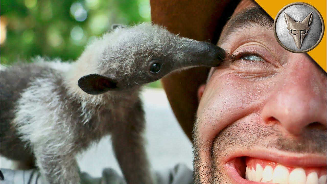 Guy Bedroom Ideas Bizarre Rainforest Creature Youtube