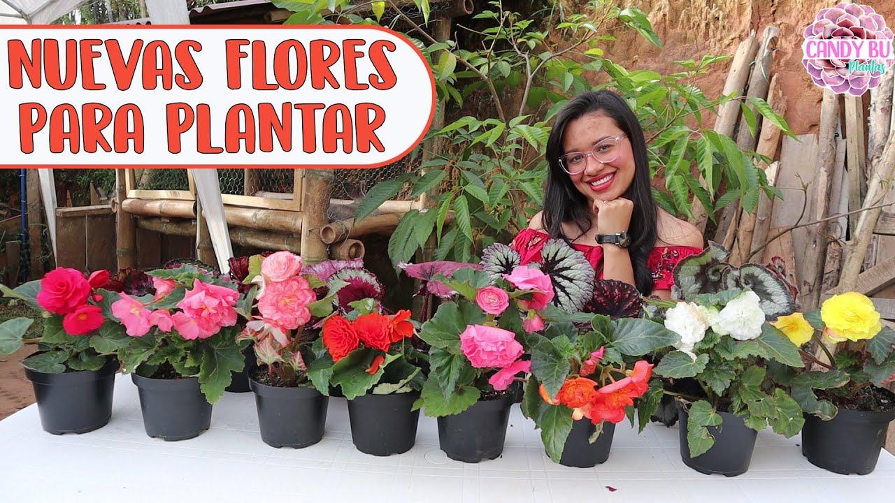 Muchas flores para plantar en la casa del conejo y recojo cosas de la calle para el jardín │Candy Bu