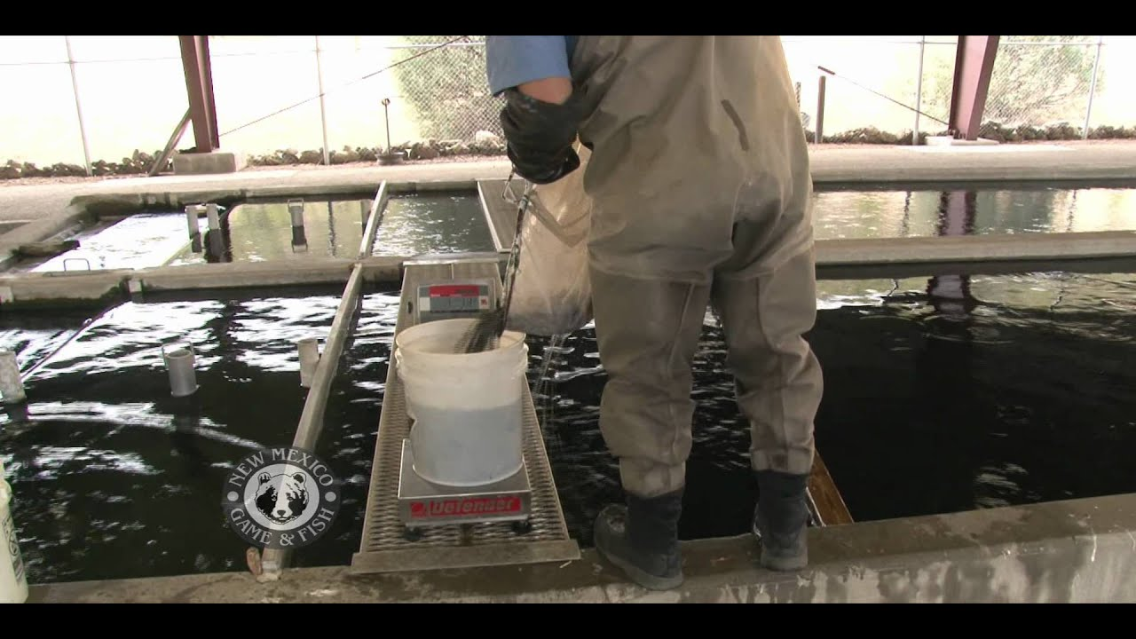 Red river state fish hatchery youtube for New mexico game and fish login