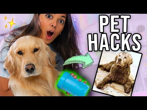 TESTING OUT WEIRD DOG GADGETS WITH JUPITER! 🐶Natalies Outlet