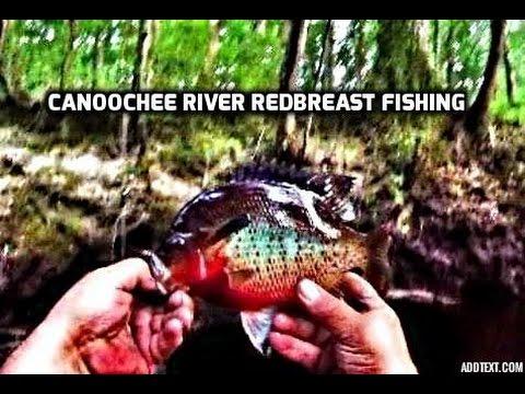 Redbreast Fishing The Canoochee River - Georgia