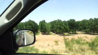 Arizona Pecan Farms