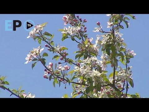 La primavera estalla en Lugo