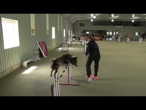 Tight Turns In Dog Agility...Video Three
