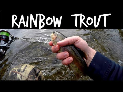 Catching Stocked Rainbow Trout At The Patapsco River In MD
