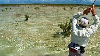 Bahamas Flats Fishing - The Walking Man by Todd Moen