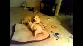 Прикольные Собаки поют и танцуют!
