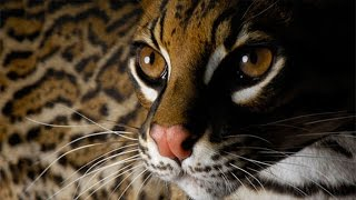 25 Of The Rarest Animals In The World