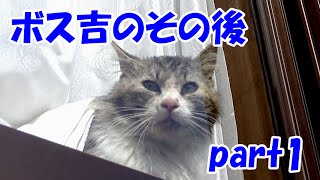保護猫ボス吉のその後 part1 Boss-Cat's life after the captor part1