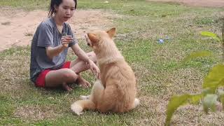 kindly owner Comforting Her Lovely Dog at flower garden very amazing.