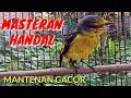 Mantenan Gacor Full Nembak Ampuh Untuk Pancingan Dan Masteran Burung Anda  Mp3 - Mp4 Download