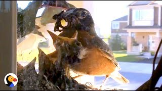 Couple Watches Baby Birds Hatch And Grow Up | The Dodo