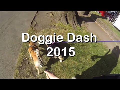 VLOG 3: Doggie Dash 2015