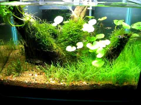 planted nano aquarium youtube. Black Bedroom Furniture Sets. Home Design Ideas