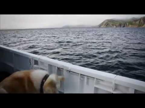 Как добраться до командорских островов