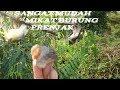 Mikat Burung Mikat Burung Prenjak Mikat Burung Kecil Burung Kolibri Ampuh Untukmikat  Mp3 - Mp4 Download