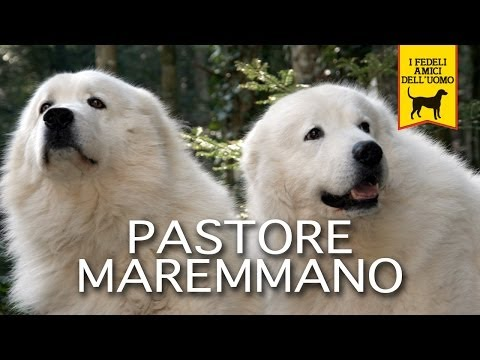 PASTORE MAREMMANO trailer documentary