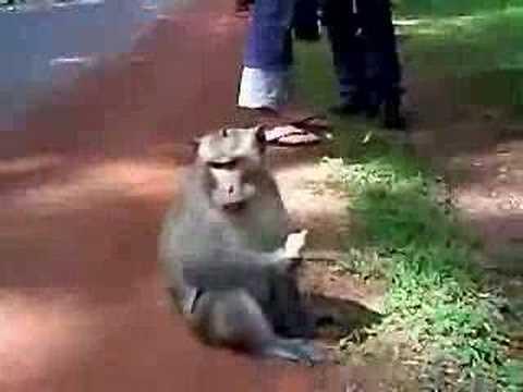 Cambodia - Friendly Monkey