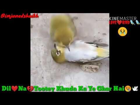 Whatsapp Status Video | Dil Na Tute Khuda Ka Ye Ghar Hai | Maahi Vee | By Juned Shaikh
