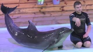 Это можно смотреть вечно! Дельфинарий в Трускавце!