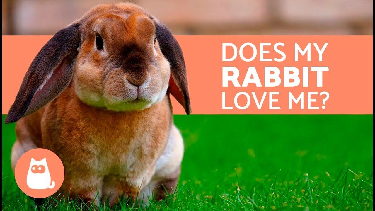5 Clear Signs That Your Rabbit Loves You Youtube
