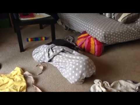Funny Boston Terrier Stuck     Boston Terribles