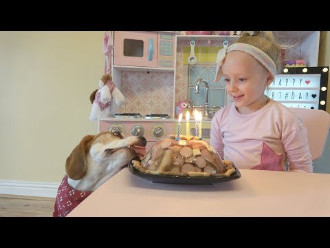 Beagle Dog Surprised by Birthday Cake and Toys