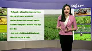 VTC14 | Thời tiết nông vụ 13/12/2017| Bắc Bộ có mưa nhỏ và sương mù
