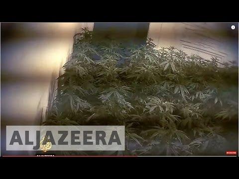 Britain's Modern Slave Trade - Cannabis - Al Jazeera Investigates