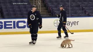 Puppy looks pretty good on the ice at St. Louis Blues practice