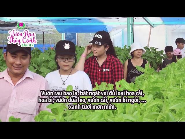 Khám phá vườn rau thủy canh Đầm Sen