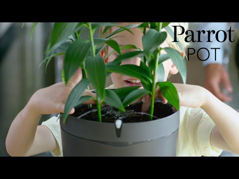 Parrot Pot - Official Video
