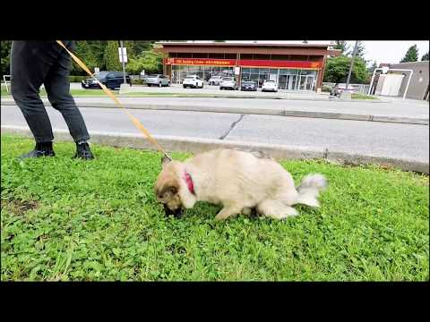 Sunshine the Dog with 4 broken legs - The Barn Door Veterinary Care - We need Bionic Vet!