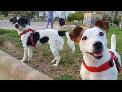 Mascotas, The Park Company