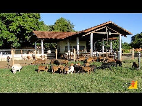 Clique e veja o vídeo Curso a Distância Alimentação de Ovinos de Corte