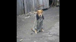 Русские — собаки — Сравнение. На цепи и в ватном пальто. Russians and a dog.