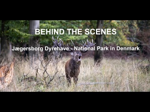 BEHIND THE SCENES - Jægersborg Dyrehave National Park in Denmark (Language: English)